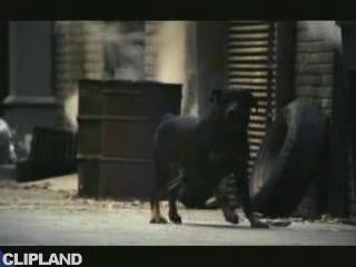 """Budweiser Budweiser """"Clydesdale Spot"""" (2007)"""